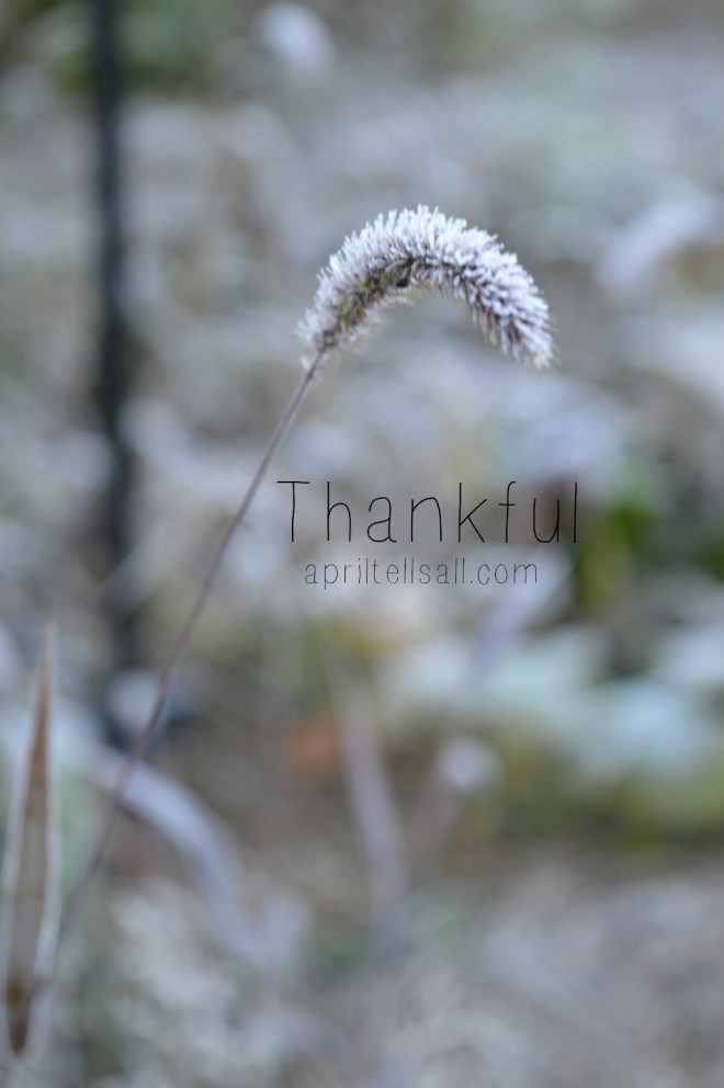 thankfultitle