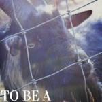 To Be A Homesteader