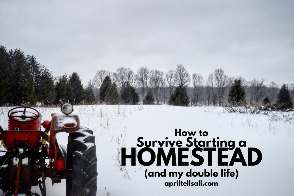 How to Survive Starting a Homestead (and my double life)