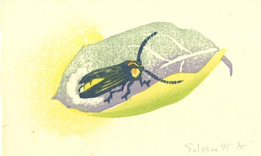 1995firefly