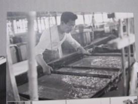 ancestor papermaker