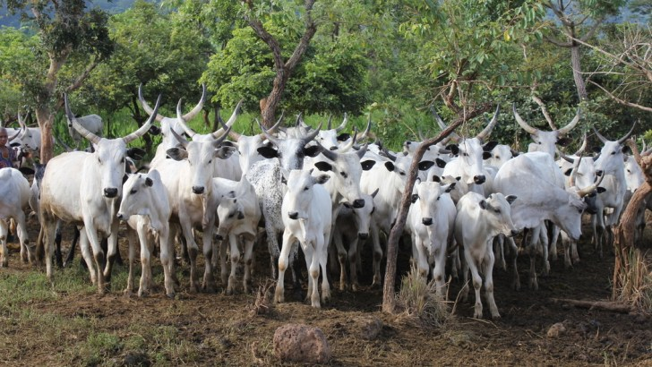 No National Grazing Bill Before Us—Senate