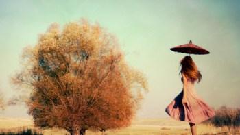 A lenda da figueira mal assombrada