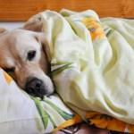 cama-cachorro-02