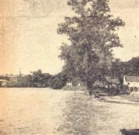 Fazia muitos anos que a árvore majestosa não se banhava nos águas do rio