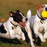 cachorros-brincando-3
