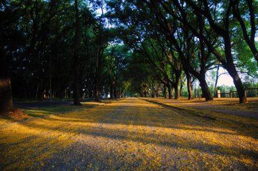 Avenida Cruzeiro do Sul em uma tarde de outono - Foto Del Rodrigues