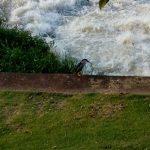 Na beira do rio – Cynthia da Rocha