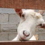 Charme animal – Cynthia da Rocha