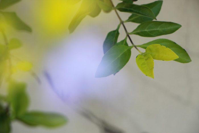 Broto de sol – Cynthia da Rocha