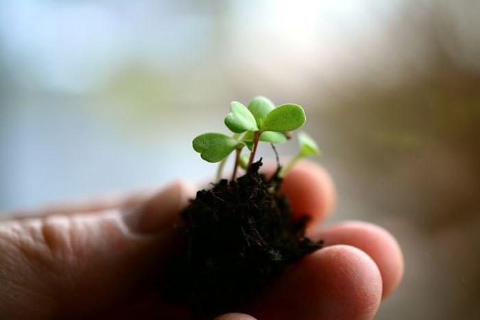 Jardinagem-1_Pixabai