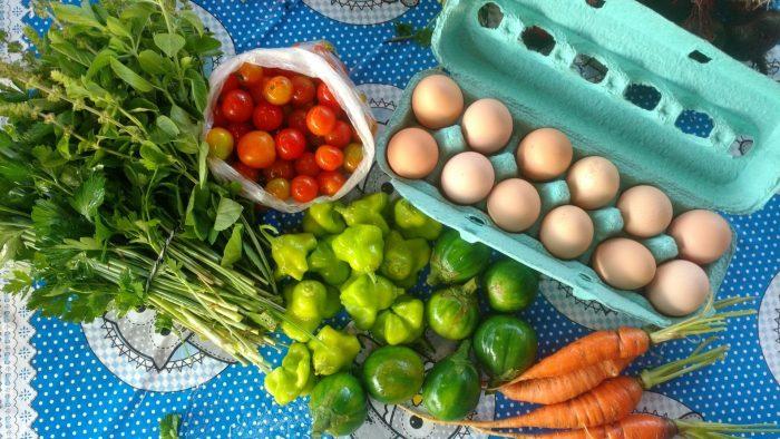 10.2019 – Alimentacao – Consumo consciente agricultura, vida e abundancia – Marina Pedrosa