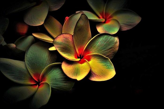 flowers-4836548_1920