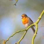 small-bird-2224946_1920