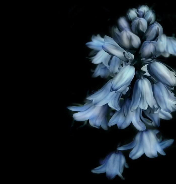 bells-flower-658751_1920