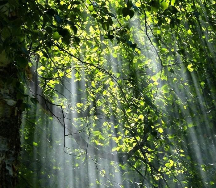 forest-56930_fonte-PIxabay_dest_OK
