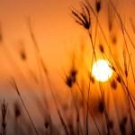 pexels-darwis-alwan-1454752_horizont