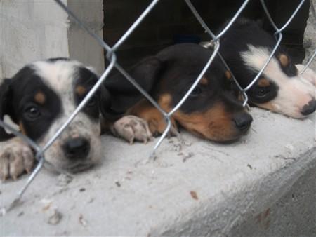 Cães 13-04-2011 Cynthia
