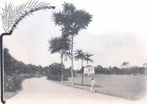 Parque em gestação
