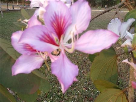 Flor 24-08-2011 Cynthia