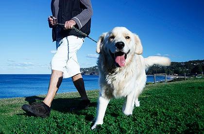 cachorro-passeando