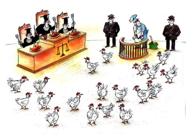 galinha-tribunal