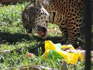 ovos zoo 2