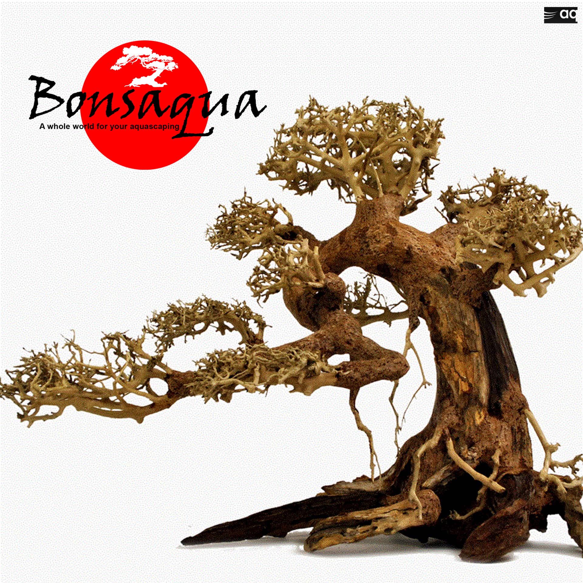 Bonsai Bonsaqua