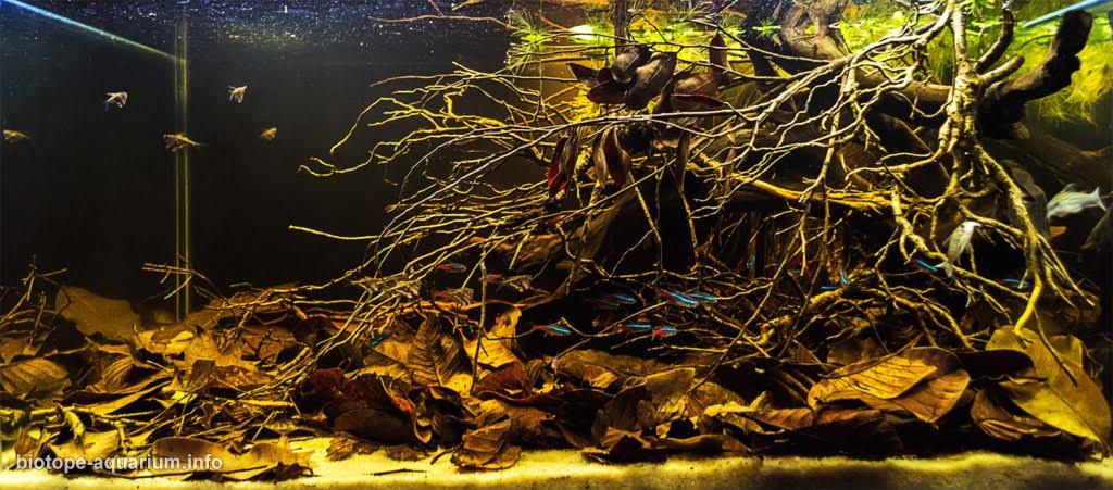 maderas para decoración de acuarios, Bonsaqua: nuevos modelos de maderas aquascaping