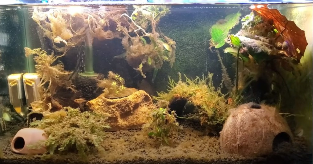 algas en el acuario 2