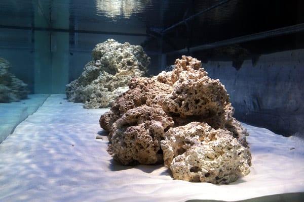 sustrato y roca en acuario