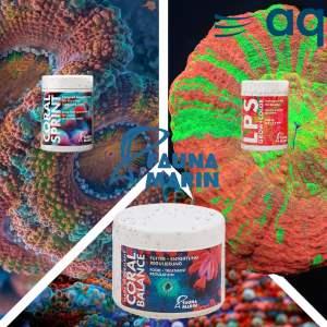 alimentos para tus corales fauna marin, Alimentos para tus corales | Fauna Marin
