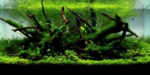Nature-style-aquascaping-600x300
