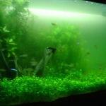 Zweef algen
