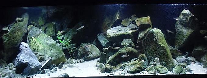 Tanganyika aquarium