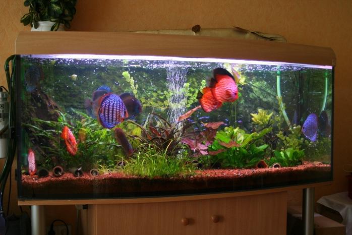Community Mein Aquarium  aqua4youde