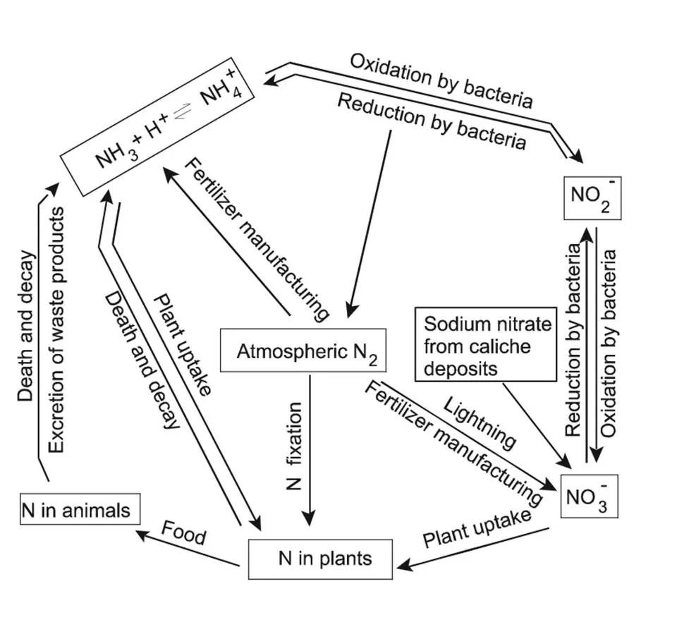 Nitrogen a limiting factor in aquaculture production