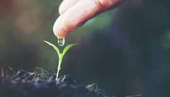 pénurie eau agriculture
