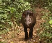 Endangered Animals In The Amazon Rainforest