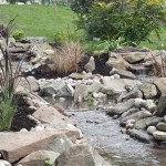 Wildlife pond: A variety od peripheral plants that flow in the wind
