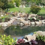 Wildlife pond and water garden finished