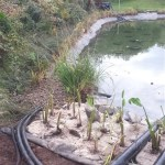 Professional pond equipment installer in Bristol