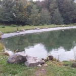 Commercial pond experts