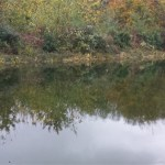 Commercail pond professionals in Bristol