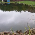 Commercial pond management