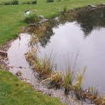 Commercial pond experts in Bristol
