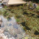 After cleaning this Bristol pond, the water is crystal clear again.