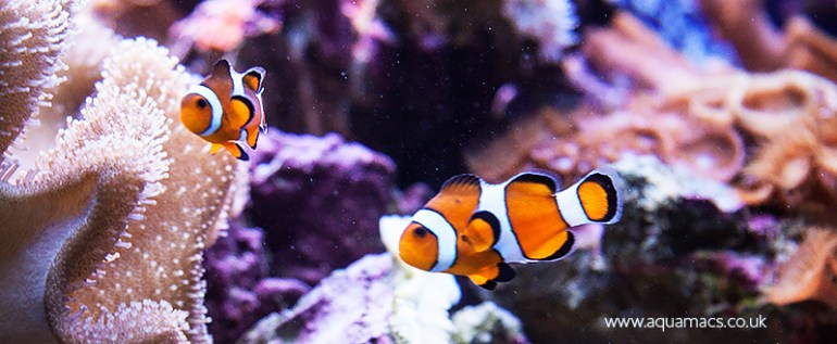 health-benefits-og-aquariums