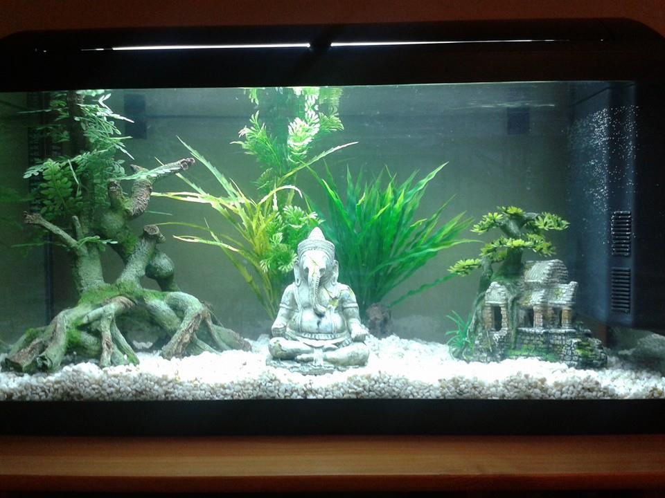 Decoration Aquarium Zen