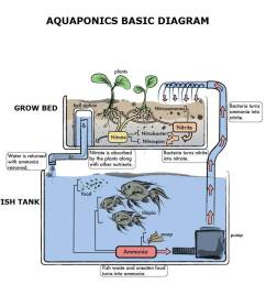 why is the nitrogen cycle so important to aquaponics  [ 938 x 960 Pixel ]